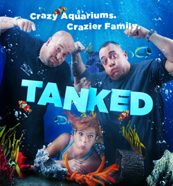 How to get on the show tanked for Fish tank show